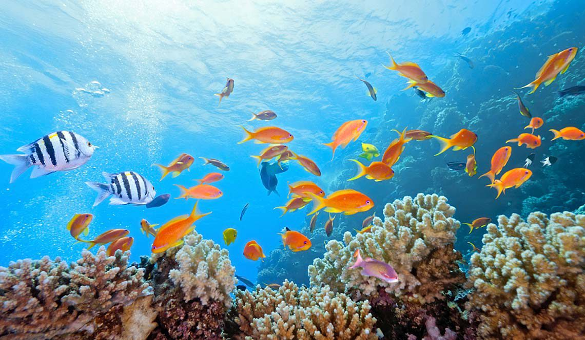 SNorkel or dive to see the rainbow colours below the yacht